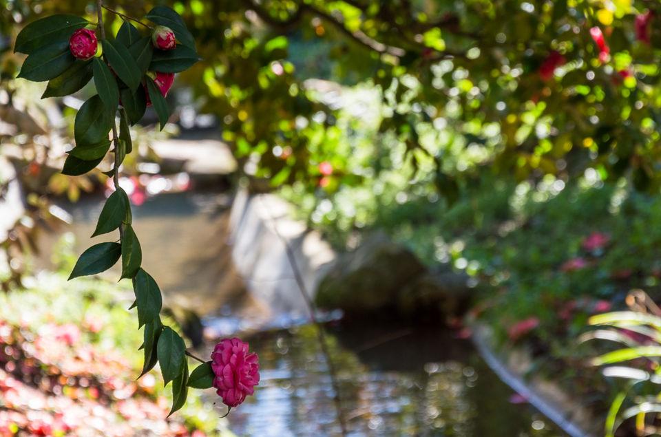 Visitare i giardini fioriti più belli d italia i consigli di