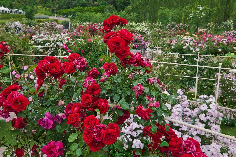 In nome della rosa grandi giardini italiani