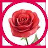 Rosa Grandi Giardini Italiani