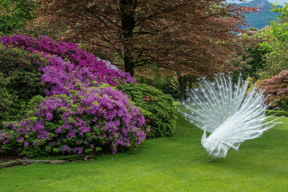 Giardini di porpora grandi giardini italiani for Esempi di giardini